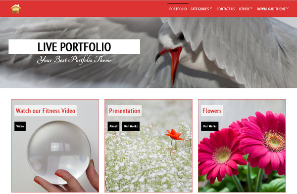 Live Portfolio - бесплатная тема WordPress для красивого оформления сайта портфолио
